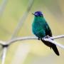 2011-08-05 - Aves da Guainumbi