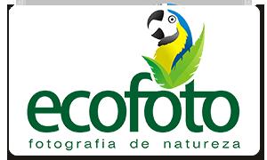 ECOFOTO | fotografia + natureza + birdwatching  + expedições + cursos