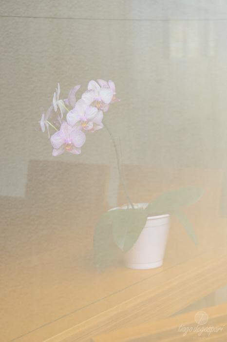 Sem o filtro PL-C, reflexo acentuado no vidro | © Tiago Degaspari (DSC8930)