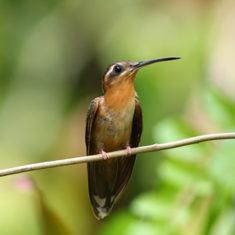 2º Festival de Aves promovido por áreas protegidas de Porto Seguro.