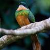 ARARAS, um novo destino para birdwatchers…