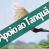 Passarinhada em apoio ao Tanquã – Piracicaba – SP