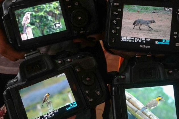 Fotos capturadas durante observação de vida selvagem. (Set./2015)